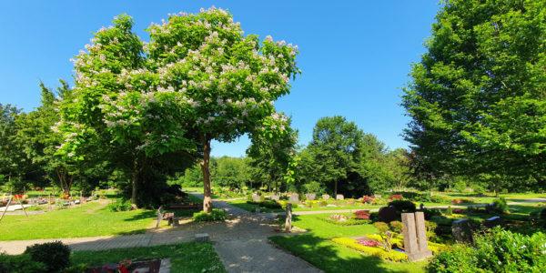 Grabfelder unter Bäumen auf dem Friedhof Beckhausen-Sutum.