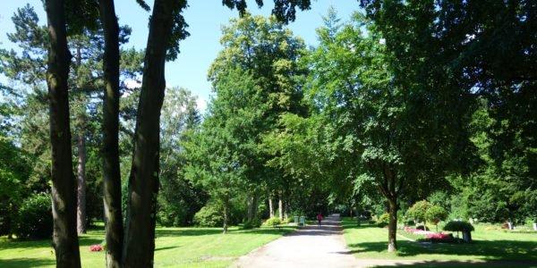 Grabfelder unter Bäumen auf dem Friedhof Horst-Süd.
