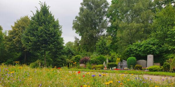 Eine Blumenwiese auf dem Friedhof Rotthausen mit einigen Gräbern im Hintergrund.