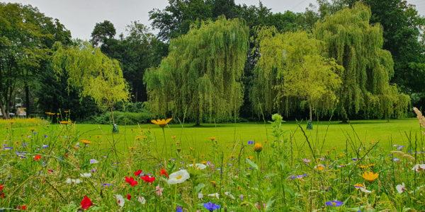 Weiden auf einer Wiese auf dem Südfriedhof in Ückendorf mit bunt blühenden Blumen im Vordergrund.